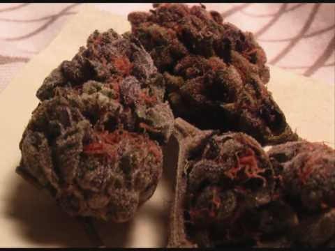 types of weed around the world PART1 Video
