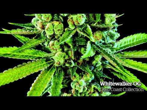 The Top 10 Strains of 2014