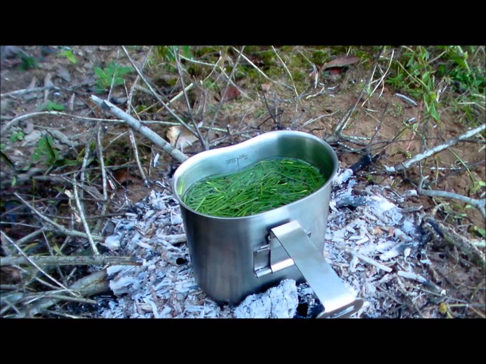 Pine Leaf Tea Pine Needle Tea