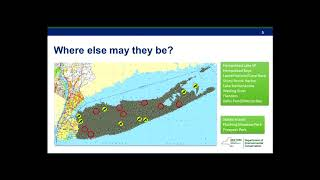 Status of Bald Eagles on Long Island