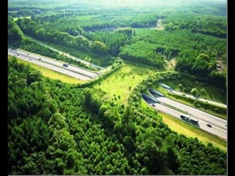 Animal Bridges - Life Saving Wildlife Crossings 2014 HD 1080p