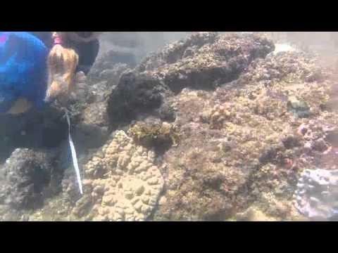 Saving Micro Marine Life