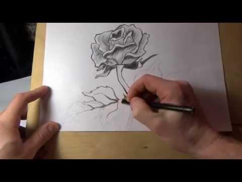 Видео как нарисовать розу карандашом поэтапно