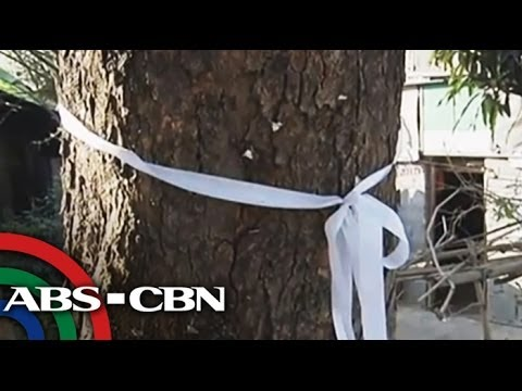 Trees saved in Pangasinan road project