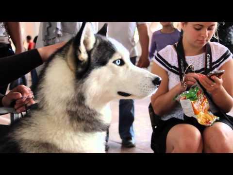 Винница.Выставка собак 18.05.2014. Винницкая весна