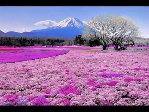 Japan Flower Festival Mount Fuji Flower Festival