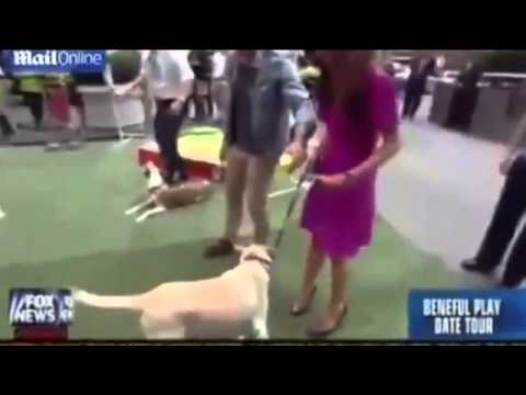 FULL] Dog Humps Fox News Weather Girl