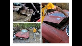 1966 Corvette Barn Find with 327 small block mouse motor