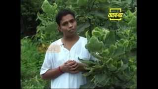 Ayurvedic use Fig (Anjeer)