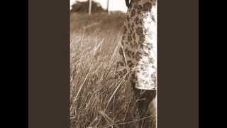 Watch Red House Painters Summer Dress video
