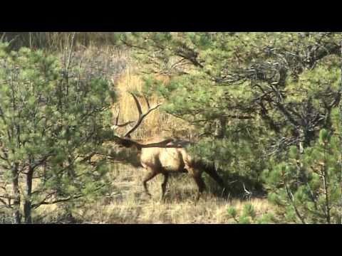 Montana Monster BULL ELK YouTube