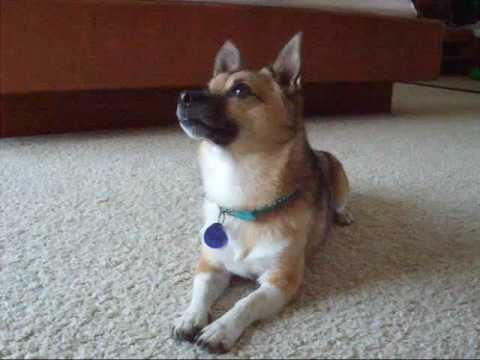 0 Amazing Shelter Dog Vinny Love Trick Training