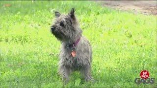 کلیپ بشدت خنده دار دوربین مخفی سگ آزاری درحد لالیگا آخرآخرخنده