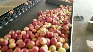 Apple sorting machine