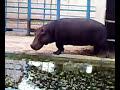 حديقة الحيوانات في قلقيلية