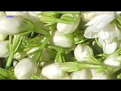 En Tamil Neyar Viruppam - Oru Malligai Mottu - Ranga Raattinam video