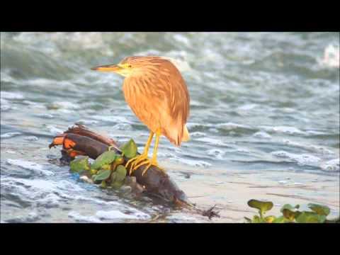 Kerala Mula Hd Video Mygupsup Best Of Entertainment