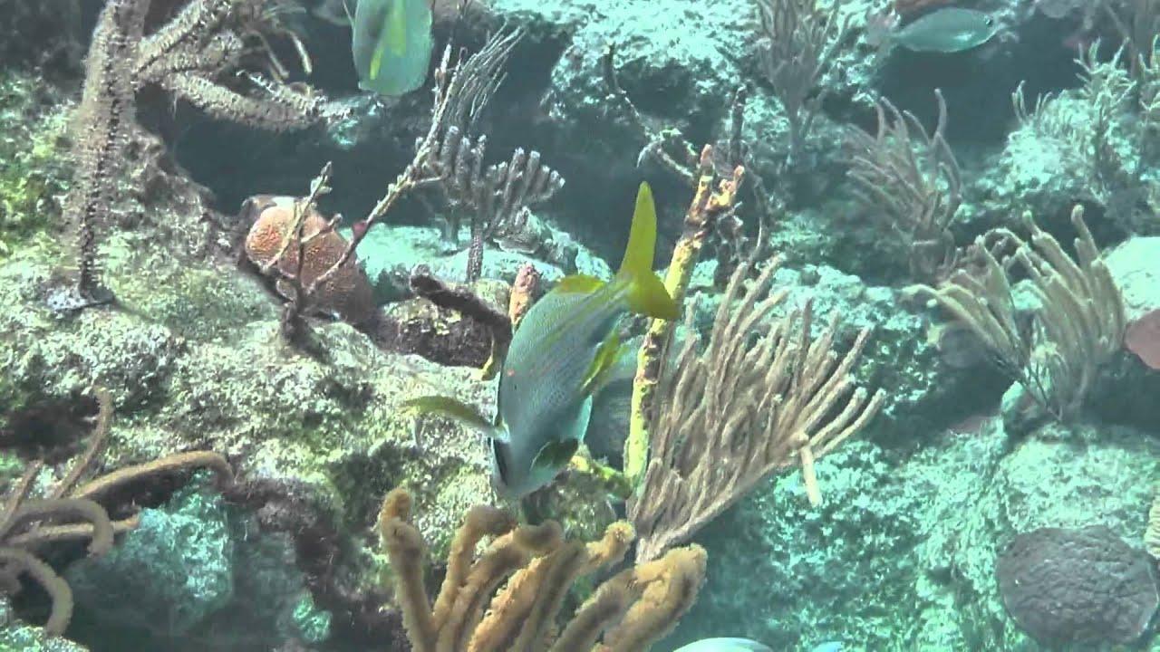 Lugares de mexico isla mujeres q youtube for Comida peces estanque barata