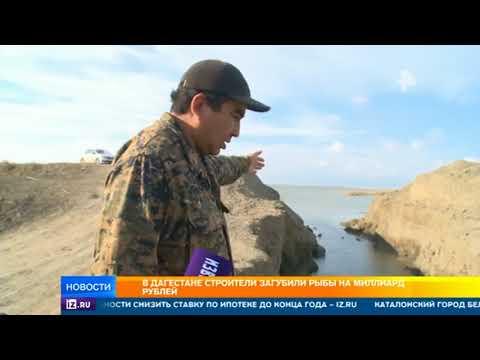 В Дагестане строители сгубили рыбу на миллиард рублей, спасаясь от потопа