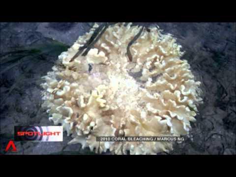 8 June 2014 Spotlight: Experts fear mass coral bleaching when El Nino returns