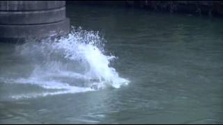 Daredevil Divers Take Icy Plunge in Rome