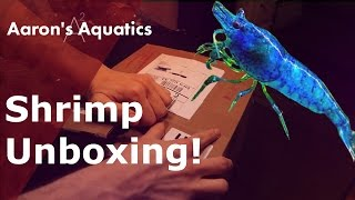 Shrimp Unboxing - Dream Blue Velvet & Tank Setup