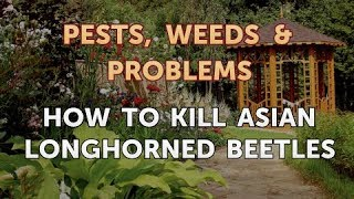 How to Kill Asian Longhorned Beetles