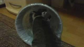 Katze sucht Essen