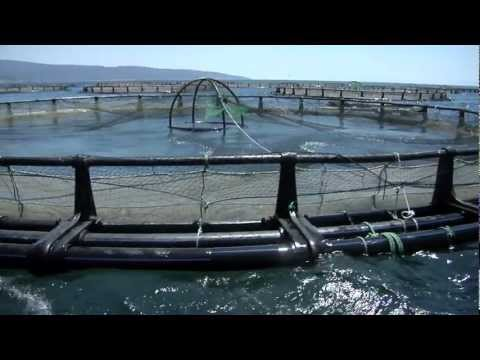 Fish Meat 'The Ideal Fish Farm'