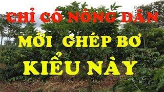 Cách Ghép Bơ BOOTH  3 Cây 1 Thân Chỉ Có Nông Dân Việt Nam Mới Làm Được