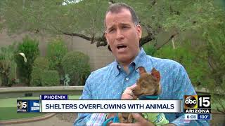 Maricopa County shelters overflowing with animals