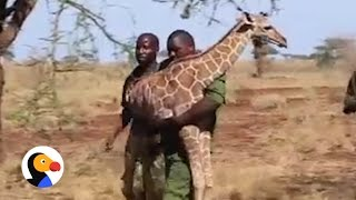 Baby Giraffe Who Lost His Mom Is Finally Safe Again | The Dodo