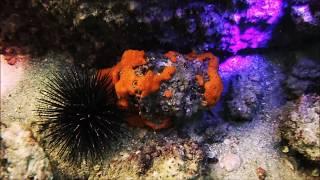 Tampa Bay Saltwater/Walt Smith International Eco-friendly Aquacultured Live Rock