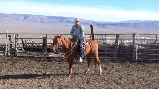 Clint Weaver Horsemanship Keeping Your Horse in a Lope Part Two