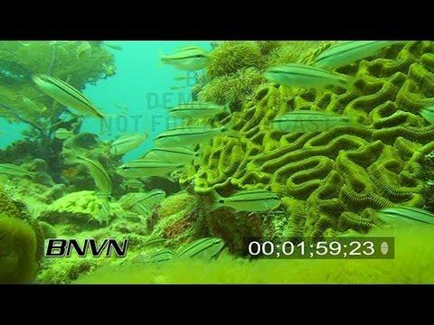 6/24/2007 Coral Scenic Scamp