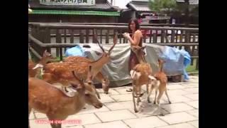 Os veados do Japão