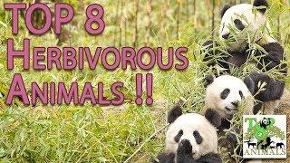 Herbivore Animals Coloring Pages : Categories video herbivorous animals