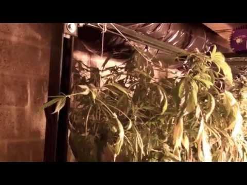 Vertical Grow Room Hydroponic Grow System Big Buddha Box Grow Room Supercloset