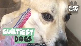 Guilty Dogs | Funny Dogs Compilation 2018 | Dogs are the Best 🐶🐶🐶