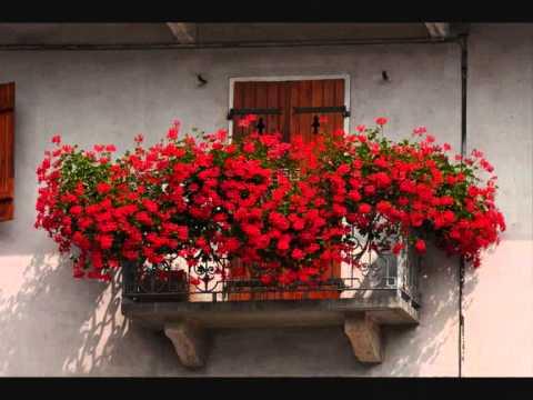 """""""E vui durmiti ancora"""" -bellissima versione moderna  – Dedicata con amore alla città di Palermo"""