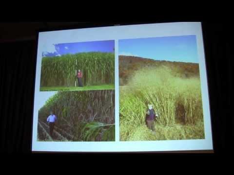 Sam Hazen at the 2013 Genomics of Energy & Environment Meeting