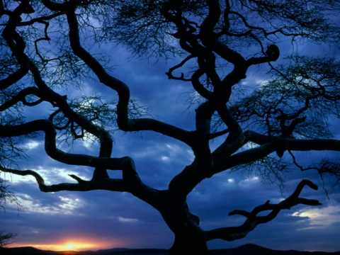 Dan Fogelberg - Serengeti Moon