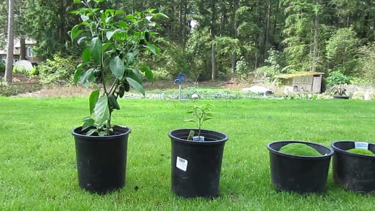 Miracle grow experiment benefits of fertilizer youtube for Fish in a tree summary