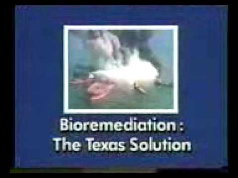 Bioremediation Oil-eating bacteria