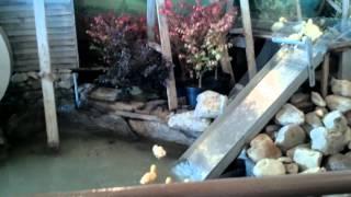 Duck Race to Water Slide