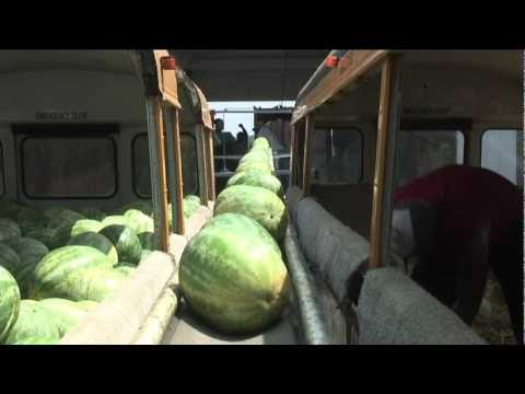 Raising watermelons: A family affair [Delaware Online News Video]