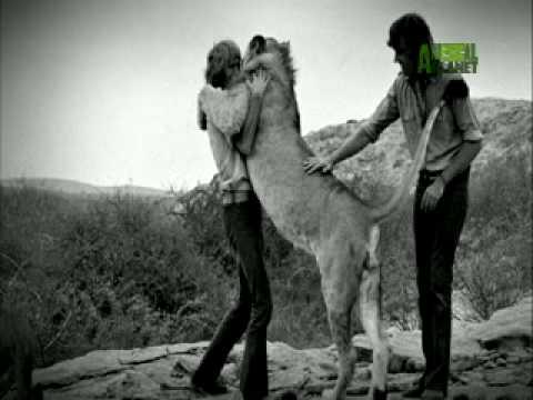 Kekuatan kasih sayang sesama makhluk hidup
