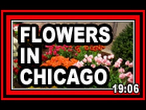Flowers In Chicago - Wisconsin Garden Video Blog 568