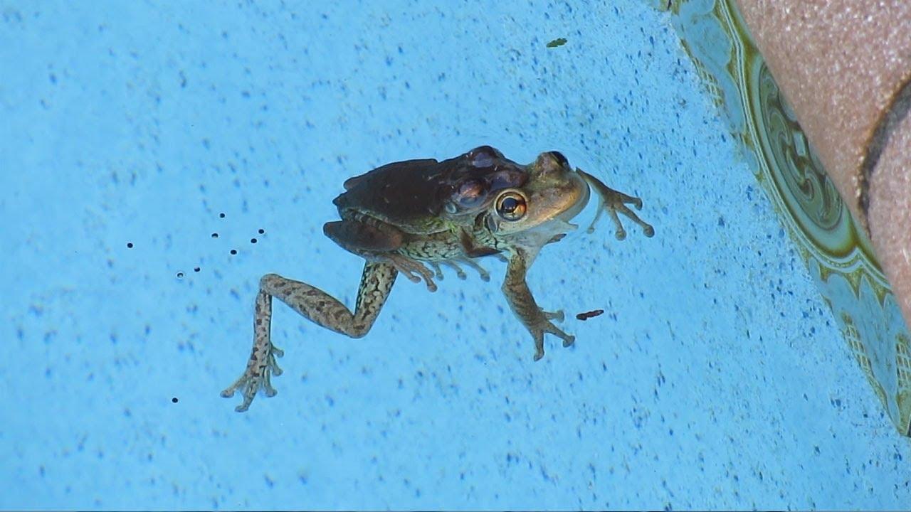 Frog Toads Spawn Egg Mass Tadpole Legs Froglet Pool