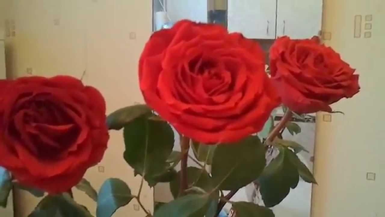 Как сделать что бы розы стояли 845